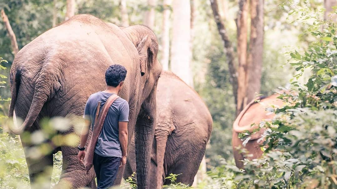 Kinh nghiệm đi Chiang Mai - Doi Inthanon