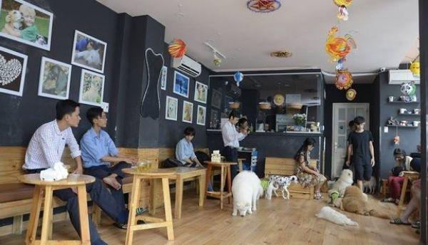Hachiko Coffee - Cafe chó HCM đáng yêu nhất