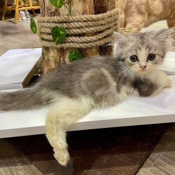 Little Cat Coffee ngôi nhà của những chú mèo dễ thương