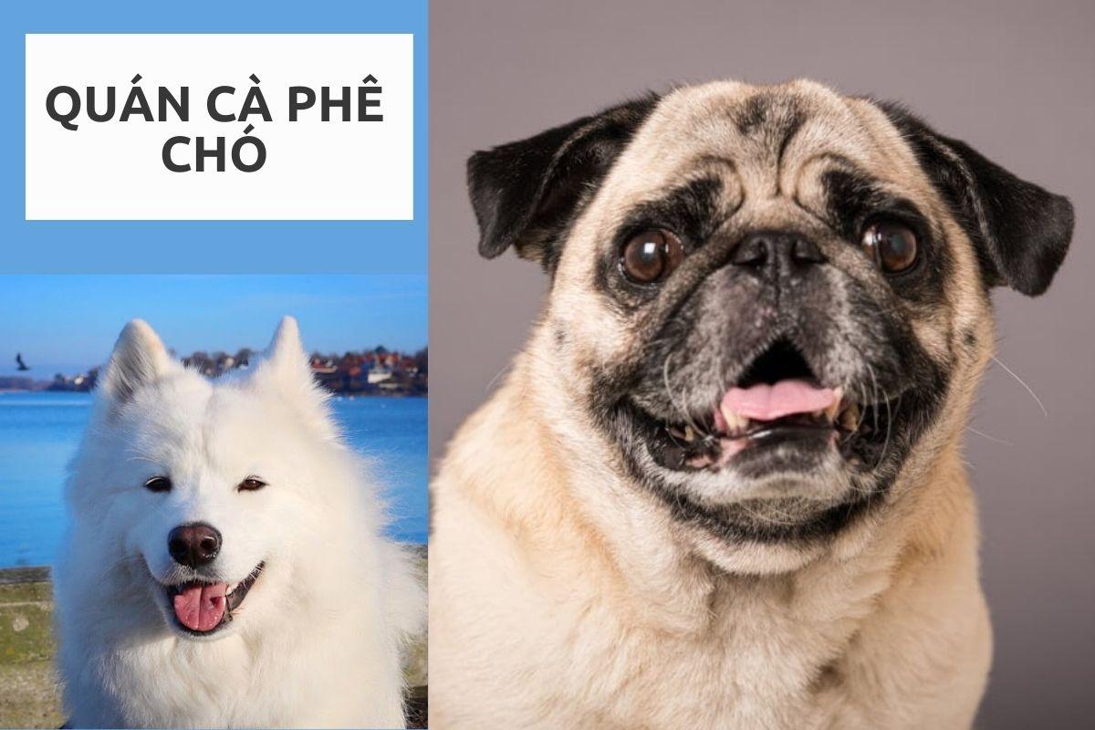 Top 10 địa điểm cà phê chó TPHCM cực thích hợp cho những bạn yêu cún