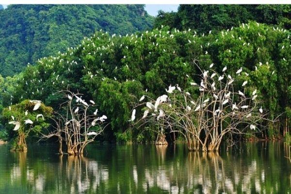Vườn chim Vàm Hồ - Du lịch sinh thái